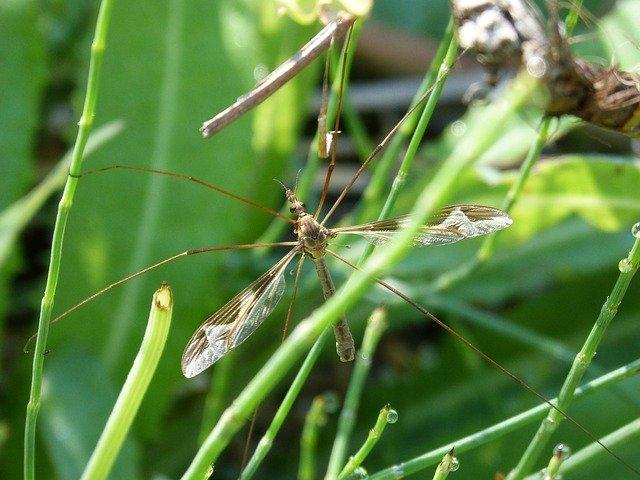 komár na trávě