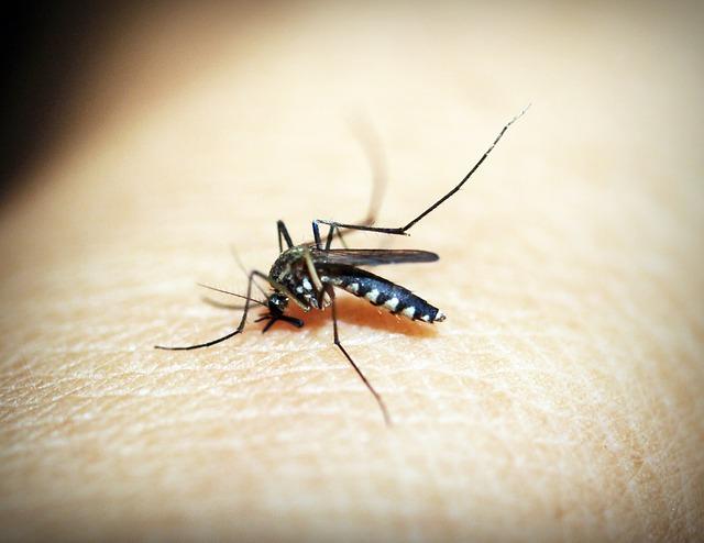 štípnutí komára