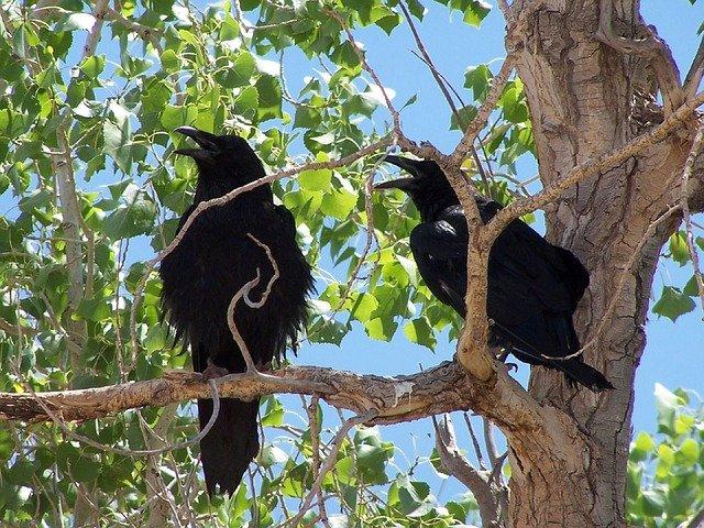 havrani na stromě