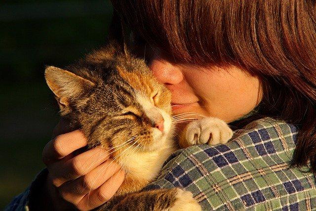 mazlení s kočkou