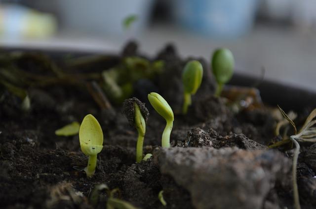 rostlinky v hlíně